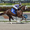 Grainger County - Maiden Win, Gulfstream Park, May 7, 2020<br /> Coglianese Photos/Lauren King
