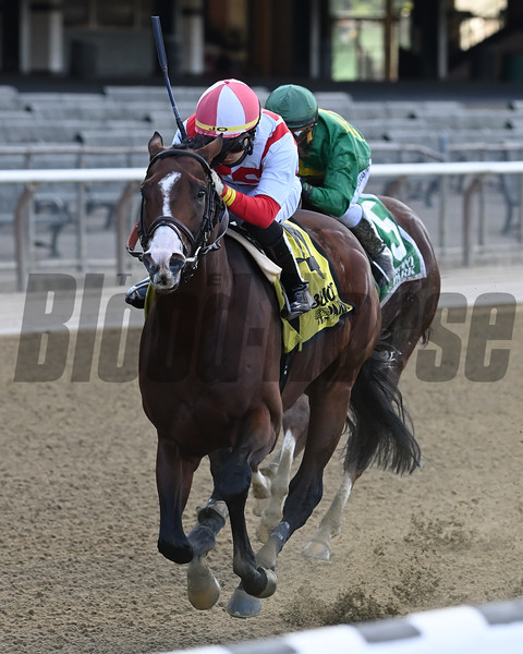 Complexity wins the 2020 Kelso Stakes at Belmont Park<br /> Coglianese Photos/Joe Labozzetta