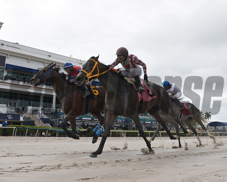 Tons of Gold (#6) and Youcantcatchcurlin deadheat to get their Maiden Wins at Gulfstream Park on May 15, 2020 <br /> Coglianese Photos/Ryan Thompson