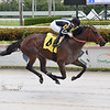 Estilo Talentoso - Maiden win, Gulfstream Park, June 17, 2020<br /> Coglianese Photos/Lauren King