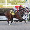 Chance It wins the 2020 Mucho Macho Man Stakes at Gulfstream Park<br /> Coglianese Photos/Lauren King