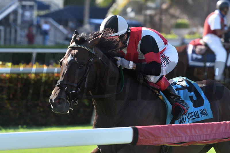 Givemetwenty wins the 2020 Not Surprising Stakes at Gulfstream Park<br /> Coglianese Photos/Ryan Thompson