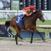 Dayoutoftheoffice - Maiden Win, Gulfstream Park, May 14, 2020<br /> Coglianese Photos/Ryan Thompson