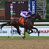 Simply Ravishing wins the 2020 P. G. Johnson Stakes at Saratoga<br /> Coglianese Photos/Susie Raisher