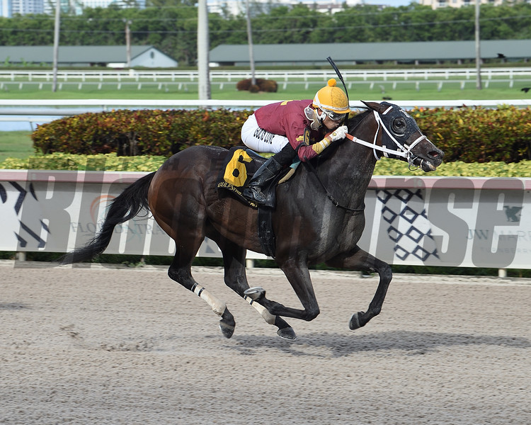 Noble Drama wins the Benny The Bull Stakes Sunday, September 6, 2020 at Gulfstream Park. Photo: Coglianese Photos/Lauren King