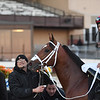 Mischevious Alex wins the 2020 Gotham Stakes at Aqueduct. Photo: Coglianese Photos/Susie Raisher