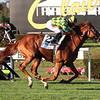 Gufo wins the 2020 Belmont Derby Invitational<br /> Coglianese Photos/Janet Garaguso