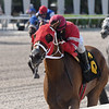 Royal Squeeze wins an allowance optional claiming Sunday, May 31, 2020 at Gulfstream Park. Photo: Coglianese Photos/Ryan Thompson