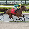 Miss T Too - Maiden Win, Gulfstream Park, March 8, 2020<br /> Coglianese Photos/Lauren King