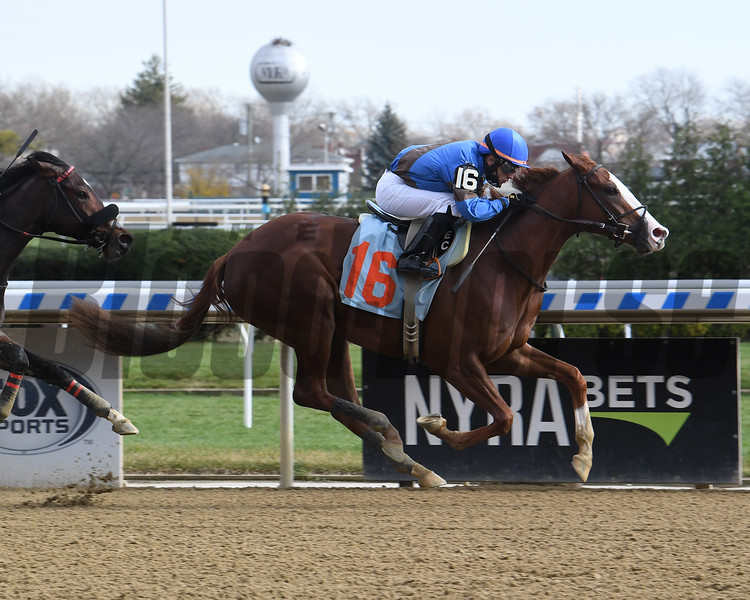 Shop Girl wins maiden special weight November 27, 2020 at Aqueduct. Photo: Coglianese Photos