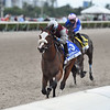 Tiz the Law wins the 2020 Holy Bull Stakes at Gulfstream Park <br /> Coglianese Photos/Ryan Thompson