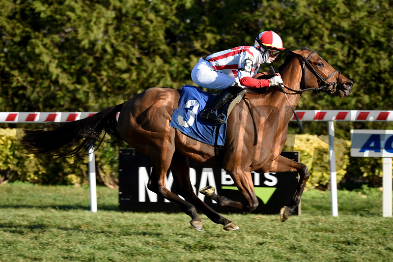Technical Analysis wins maiden special weight Sunday, November 29, 2020 at Aqueduct. Photo: Coglianese Photos
