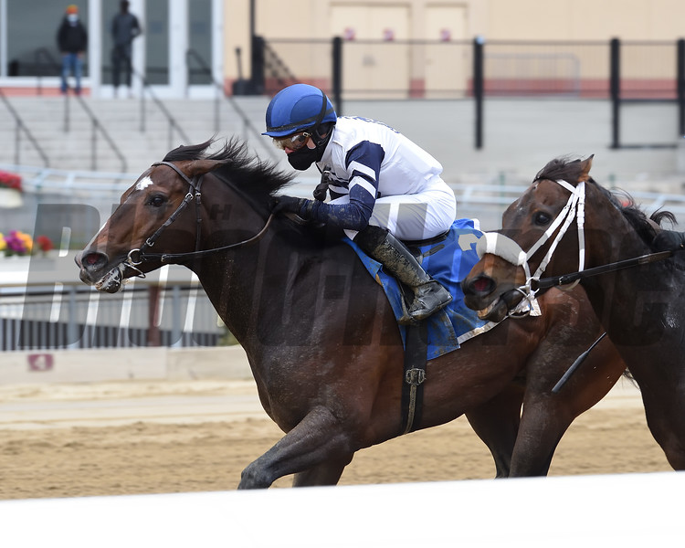 Funny Guy wins the New York Stallion Series Stakes Sunday, November 22, 2020 at Aqueduct. Photo: Coglianese Photos/Chelsea Durand