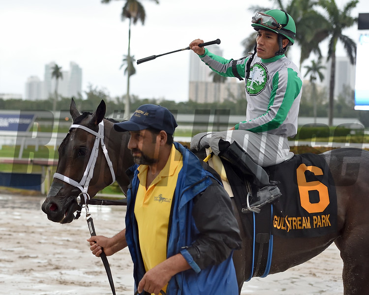 Cookie Dough wins the 2020 Royal Delta Stakes at Gulfstream Park. Photo: Coglianese Photos/Ryan Thompson