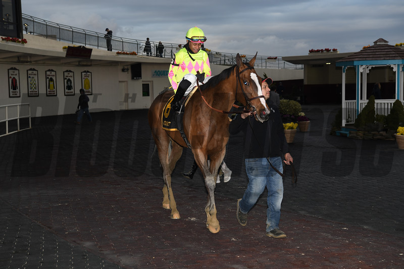 More Mischief wins the 2020 Biogio's Rose Stakes at Aqueduct. Photo: Coglianese Photos