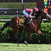 Golden Pal wins the 2020 Skidmore Stakes at Saratoga<br /> Coglianese Photos/Susie Raisher