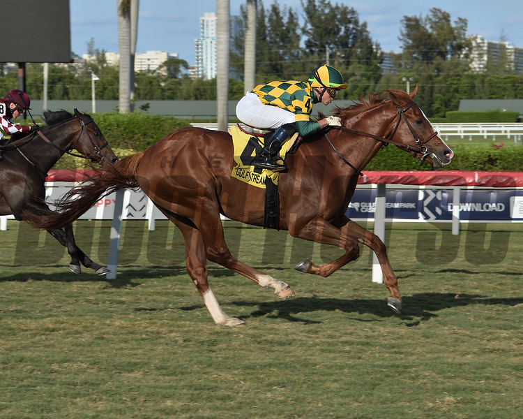 Gufo wins the 2020 English Channel Stakes at Gulfstream Park<br /> Coglianese Photos/Lauren King