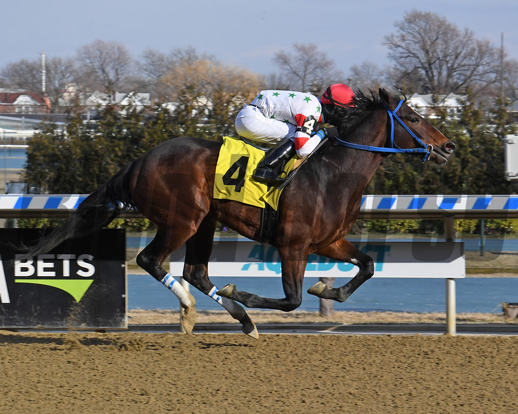 Mr Phil wins a maiden special weight February 28, 2020 at Aqueduct Racetrack. Photo: Coglianese Photos