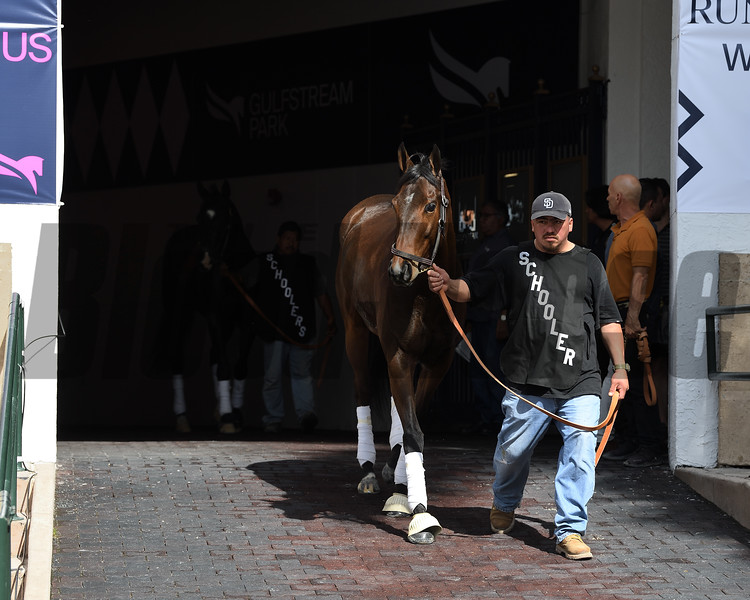 Spiced Perfection schooling at Gulfstream Park, January 24, 2020<br /> Coglianese Photos