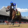 Nonna Madeline wins the 2020 Summer Colony Stakes at Saratoga<br /> Coglianese Photos/Chelsea Durand