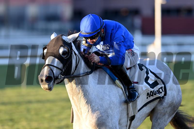 Lovestruck wins the Tepin Stakes Sunday, November 29, 2020 at Aqueduct. Photo: Coglianese Photos/Chelsea Durand