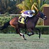 Diligent - Maiden Win, Gulfstream Park West, November 28, 2020<br /> Last race at Gulfstream Park West (aka Calder)<br /> Coglianese Photos/Ryan Thompson