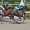 Brewmeister wins an allowance optional claiming race Sunday, August 16, 2020 at Gulfstream Park. Photo: Coglianese Photos/Lauren King