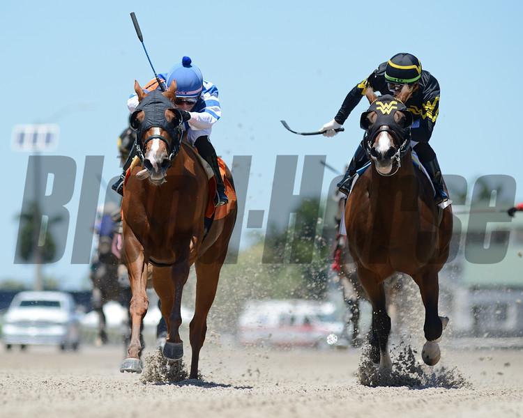 Exchange Day - Maiden Win, Gulfstream Park, May 1, 2020<br /> Coglianese Photos/Ryan Thompson