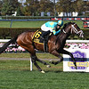 Fire At Will wins the 2020 Pilgrim Stakes at Belmont Park<br /> Coglianese Photos/Susie Raisher