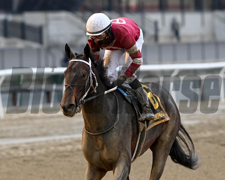 Bankit wins the 2020 Alex M. Robb Stakes at Aqueduct<br /> Coglianese Photos/Joe Labozzetta