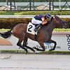 Sayonara Baby wins an allowance optional claiming race July 8, 2020 at Gulfstream Park. Photo: Coglianese Photos/Lauren KIng
