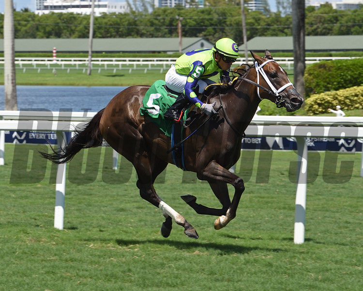 Pseudonym wins maiden special weight Sunday, August 9, 2020 at Gulfstream Park. Photo: Coglianese Photos/Lauren King