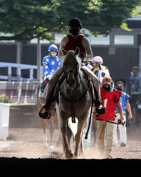 Horses heading to the track for the 67th Running of the United Nations (GI) at Monmouth Park on July 18, 2020. Photo By: Chad B. Harmon