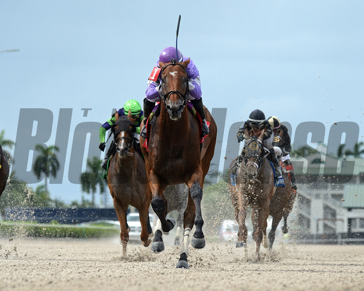 Cool Arrow wins the Opening Lead Stakes Sunday, August 2, 2020 at Gulfstream Park. Photo: Coglianese Photos/Ryan Thompson
