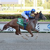 Sally's Curlin wins the 2020 Hurricane Bertie Stakes at Gulfstream Park. Photo: Coglianese Photos/Lauren King
