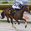 Wholebodemeister - Maiden Win, Gulfstream Park, July 11, 2020<br /> Coglianese Photos/Ryan Thompson
