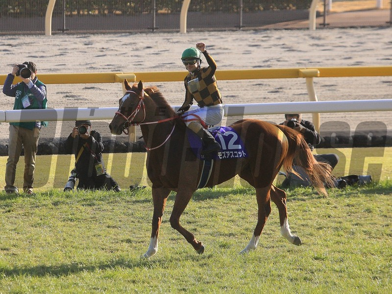 Mozu Ascot wins the 2020 February Stakes at Tokyo Racecourse. Photo: Naoji Inada
