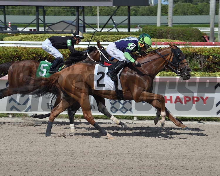 Royal Squeeze wins an allowance optional claiming Sunday, May 31, 2020 at Gulfstream Park. Photo: Coglianese Photos/Lauren King