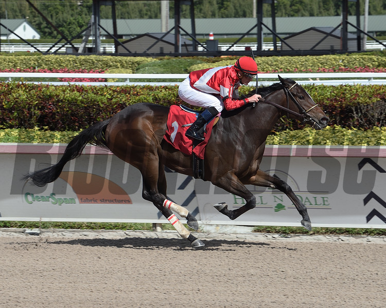 Four Graces wins the 2020 Maiden at Gulfstream Park. Photo: Coglianese Photos