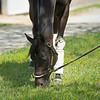 Caption: grazing<br /> Midnight Bisou at Keeneland on May 2, 2020 Keeneland in Lexington, KY.