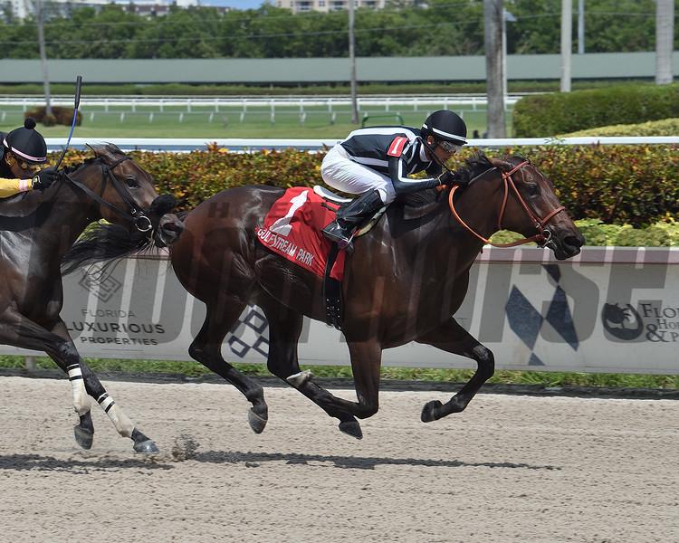 Estilo Talentoso wins 2020 Escena Stakes Sunday, August 30, 2020 at Gulfstream Park. Photo: Coglianese Photos/Lauren King