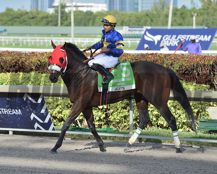 Jackson wins the 2020 World of Trouble Sprint Stakes at Gulfstream Park. Photo: Coglianese Photos/Ryan Thompson