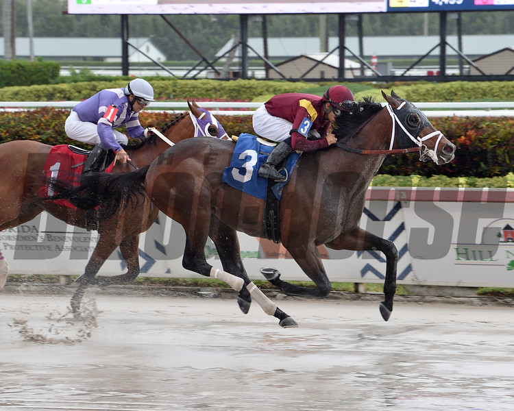 Money Moves wins a maiden special weight February 15, 2020 at Gulfstream Park. Photo: Coglianese Photos/Lauren King