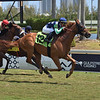 Duellist - Maiden Win, Gulfstream Park, April 4, 2020<br /> Coglianese Photos/Lauren King
