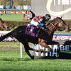 Step Dancer wins the 2020 Awad Stakes at Belmont Park<br /> Coglianese Photos