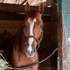 Mr Fresse at Gulfstream Park. Photo: Joe DiOrio