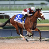 Tiz the Law wins the 2020 Holy Bull Stakes at Gulfstream Park<br /> Coglianese Photos/Lauren King