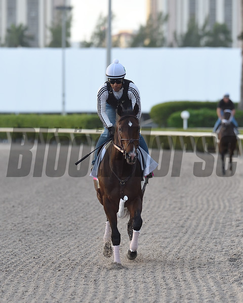 Omaha Beach - Morning - Gulfstream Park - 011920. Photo: Coglianese Photos/Ryan Thompson