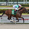 Hidden Scroll wins an allowance optional claiming race March 1, 2020 at Gulfstream Park. Photo: Coglianese Photos
