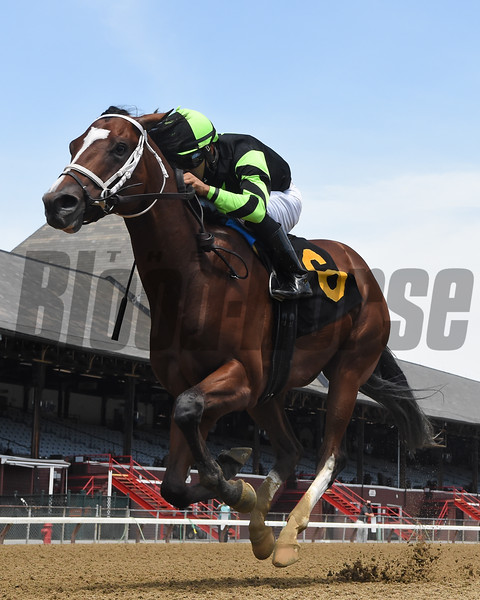Effinity wins maiden special weight Sunday, July 26, 2020 at Saratoga Race Course. Photo: Coglianese Photos